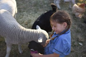 Student in petting zoo at Open Night