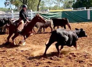 Horse Cutting