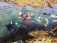 Snorkelling on Year 12 Biology Trip at Hastings Point